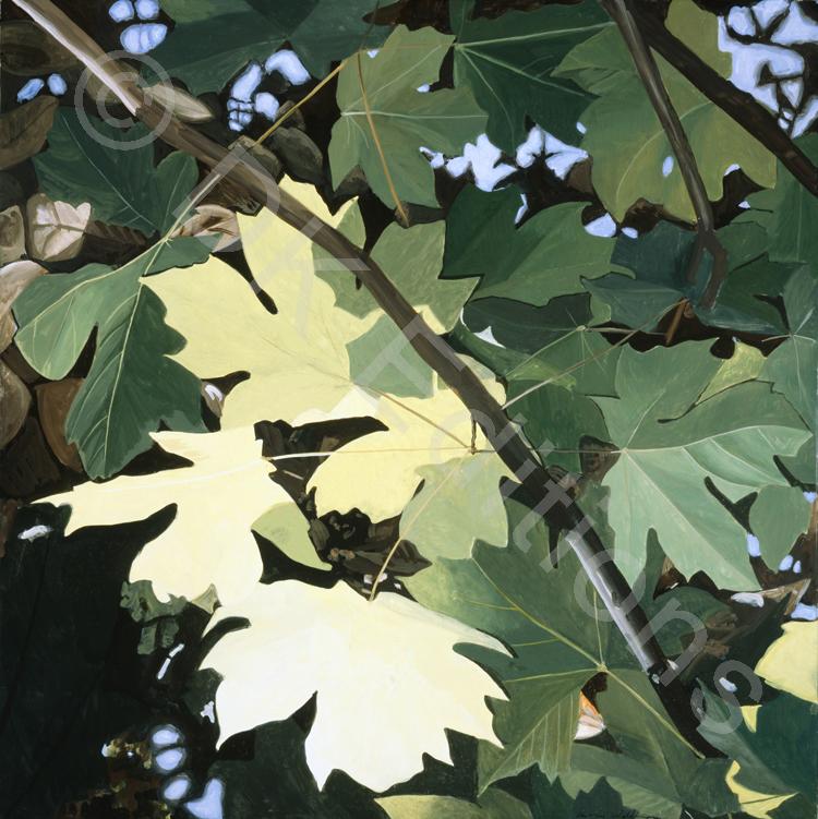Carrie Waldman, <em>Big Leaf</em> <br/>Edition of 500