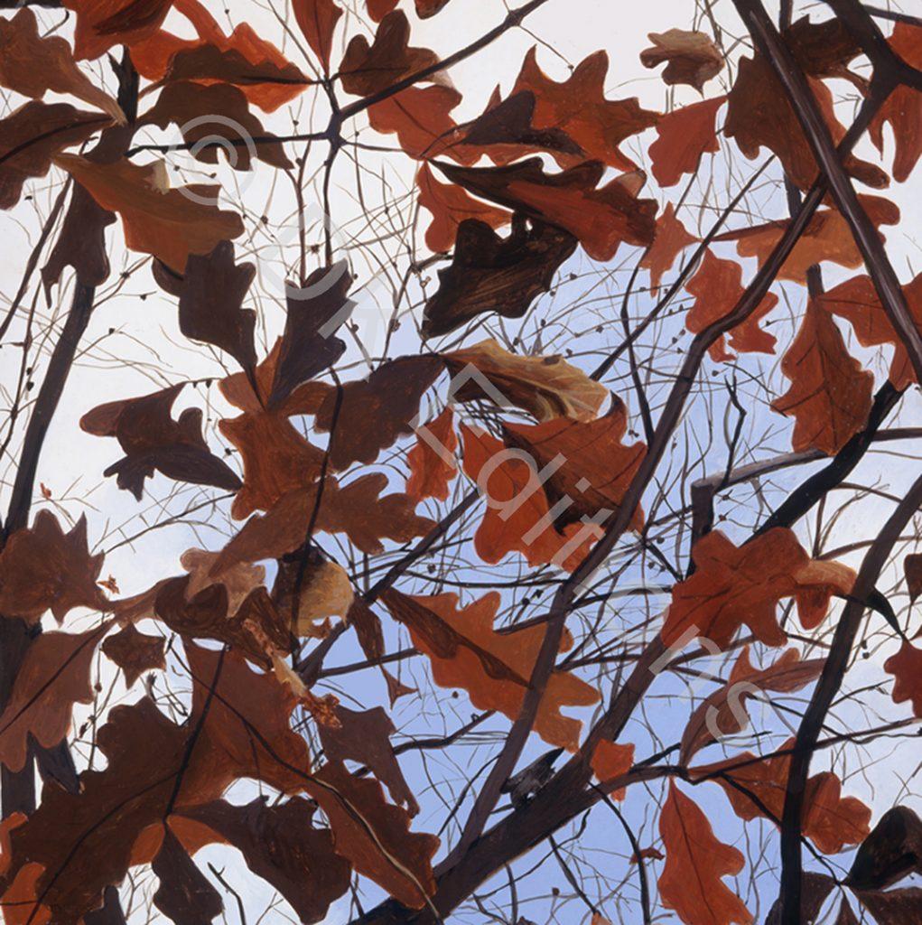 Carrie Waldman, <em>Red Oak</em> <br/>Edition of 500